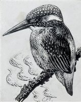 "280 - C.F. Tunnicliffe, ""Kingfisher"", ink on scraperboard."