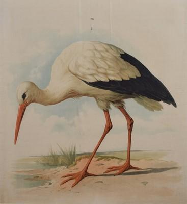 Lot 77 - Stork Print