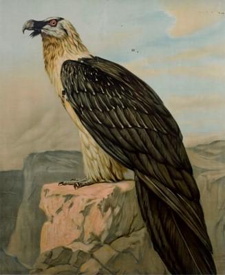 Lot 76 - Large Print of a Bird of Prey