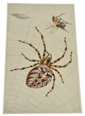 Lot 84 - Two Insect Posters