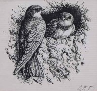 Lot 527-C.F. Tunnicliffe, Nesting house martins, ink.