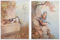 """Lot 3 - Two limited edition Archibald Thorburn prints, """"House Martins"""" & """"Nuthatches""""."""